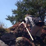 本日の業務 ―。三尾山にて城攻め、山菜摘み。