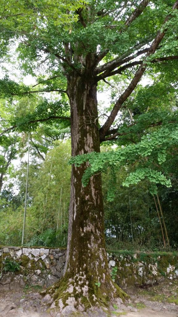 松・杉・檜のありがたさに感謝するように、大切に扱われていました