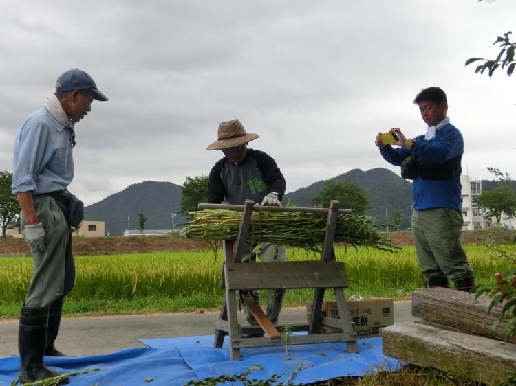 真ん中は、圃場の管理者徳田八州男さん。自作の「馬」で、刈り取ったごまを手際よく結束していきます。